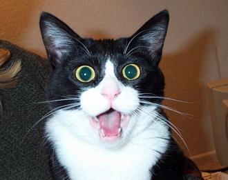 2ac29_surprised-cat